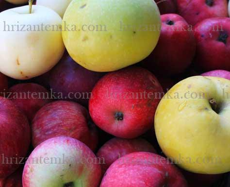 Як сушити яблука в сушарці