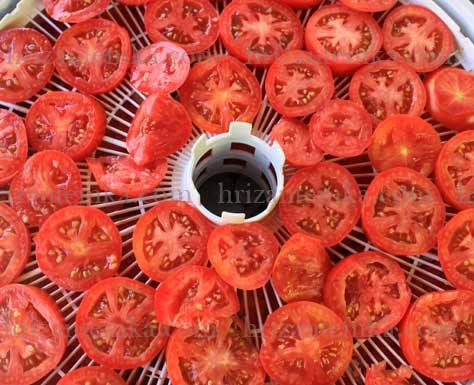 Як сушити помідори в електричній сушарці